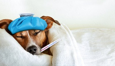 Top Tips for Staying Well Over Winter